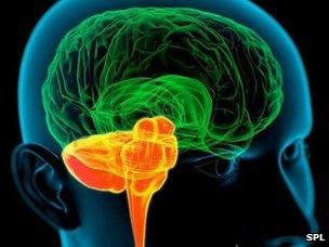 Bilingualism and the Human Brain